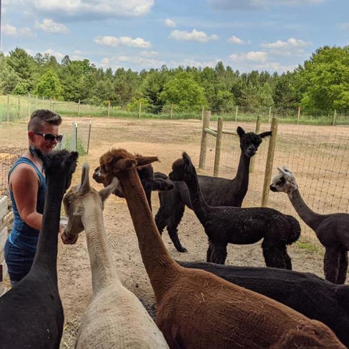 Alpacas-Eating-During-Tour
