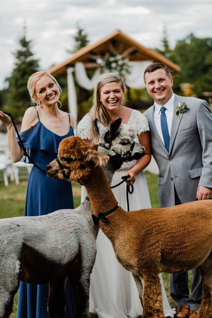 Wedding Fun With the Alpacas
