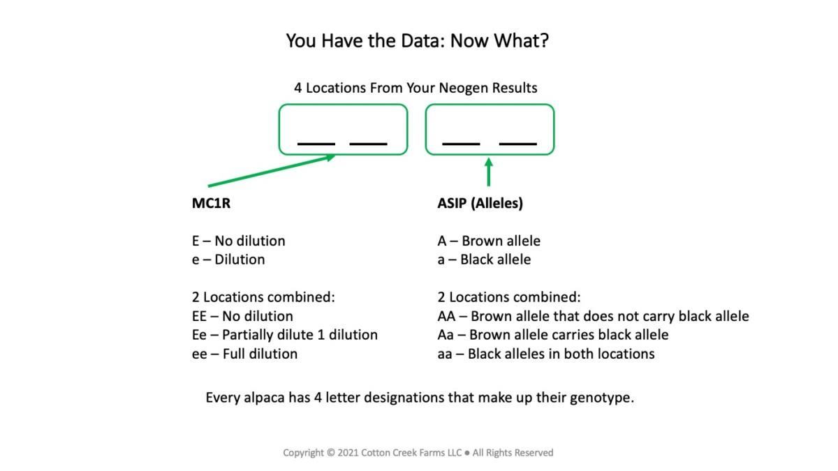 4 Locations of Alpaca Color Testing Data
