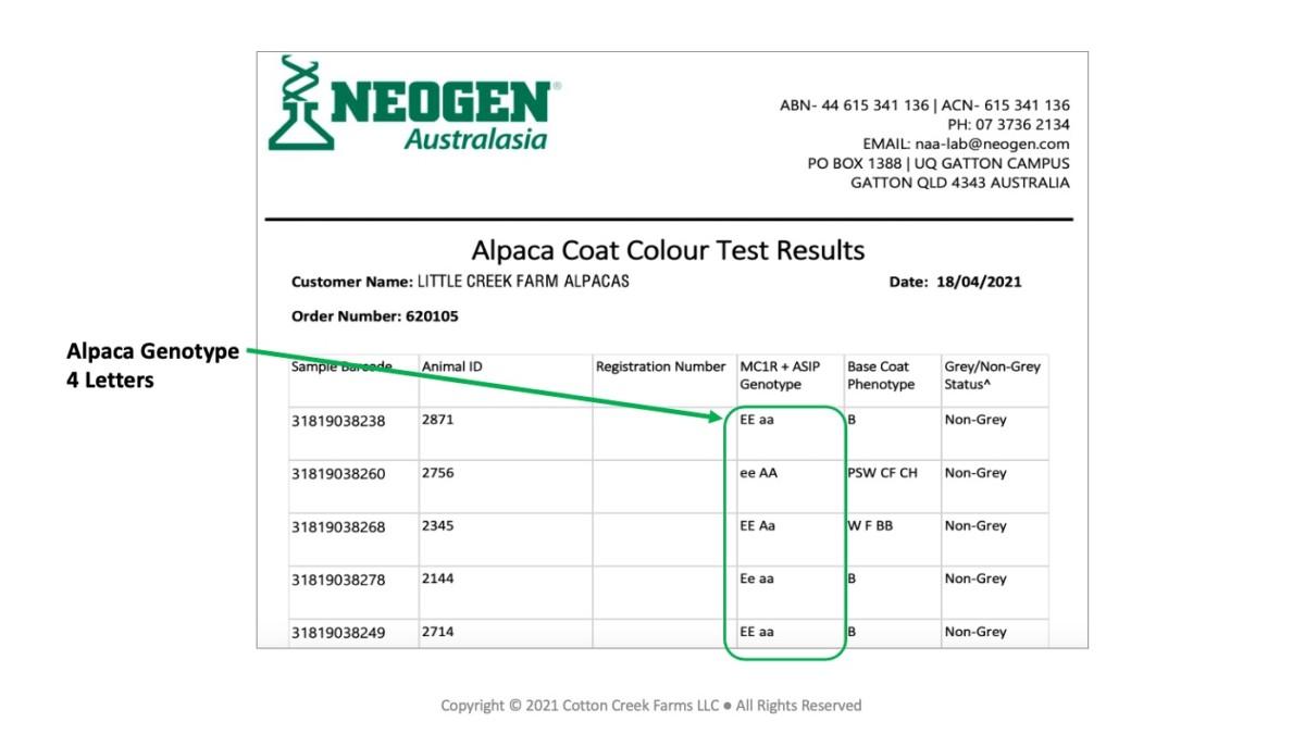 Alpaca Coat Color Test Results Example
