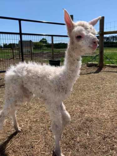 Newborn Levi