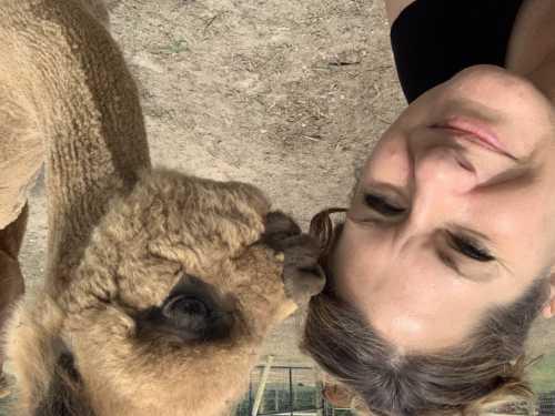 Teddy Giving Kisses