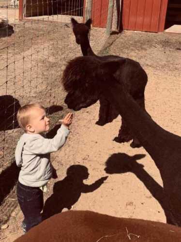 Little Guy Feeding Zula
