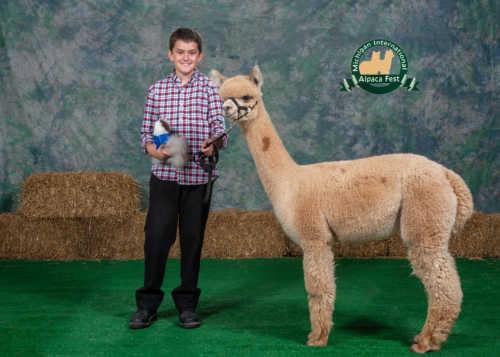 Michigan Alpaca Fest - Adel