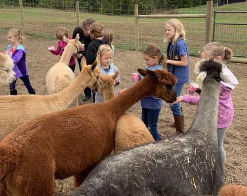 More Alpaca Snacks and More Birthday Fun